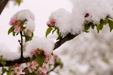 Schnee-Fruehling-1006689