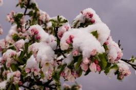 Wintereinbruch_Fruehling-1006134