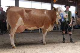 Stettner Karl, Breitbrunn-Oberkitzing – Sieger Kühe mit 5 und mehr Kalbungen