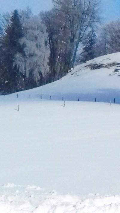 Winterimpressionen (6)