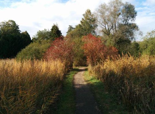 der Chiemseeradweg zwischen Prien und Felden