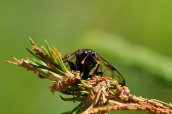AktNatBeo-210710-ja-17_Insekt