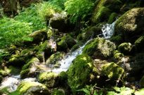 Jubilaeumswanderung Naturschutzgebiet Geigelstein (8)