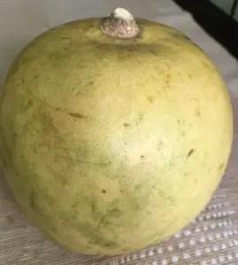 Bael Sherbet/ Wood apple Squash