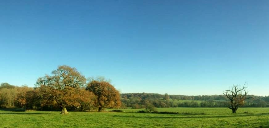 Field and forest, yoxall, stafordshire