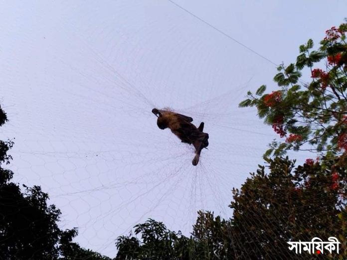 1 1 নাটোর উত্তরা গণভবন: <br>কারেন্ট জাল বিছিয়ে বিলুপ্ত প্রজাতির প্রাণী নিধন