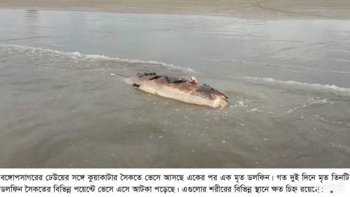 kalapara pic2 dolphin recovery 10 05 2021 সাগরের ঢেউয়ে ভেসে আসছে একাধিক মৃত ডলফিন