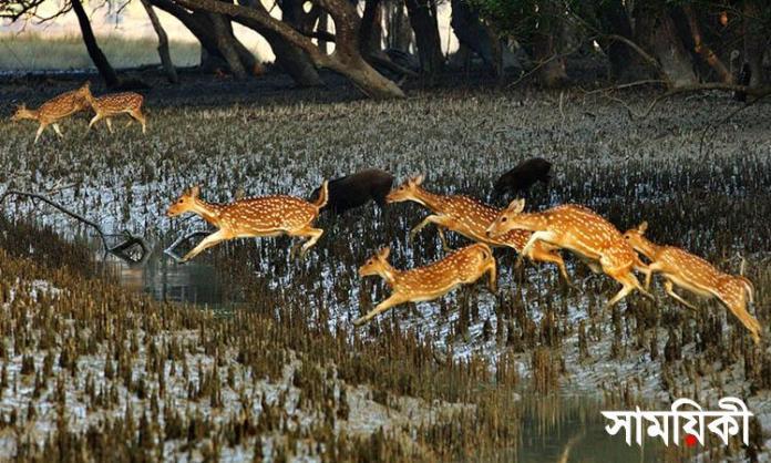sunor পূর্ব সুন্দরবনে শিকারী চক্র ও কাঠ পাচারকারীরা সক্রিয়
