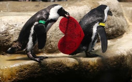 Penguin valentines image