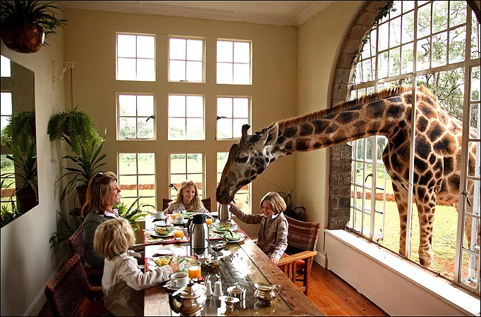 Image result for giraffe manor nairobi