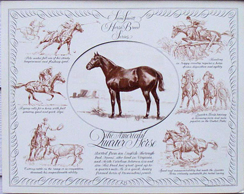 Quarter Horse in Portrait & Action