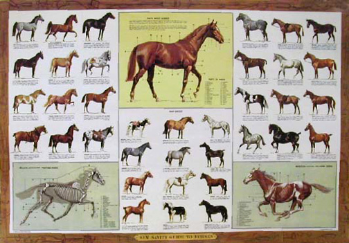 Guide to Horses