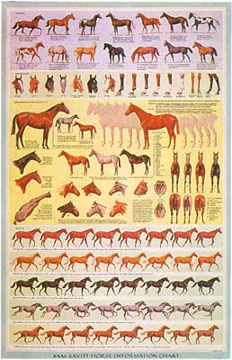 Horse Information Chart