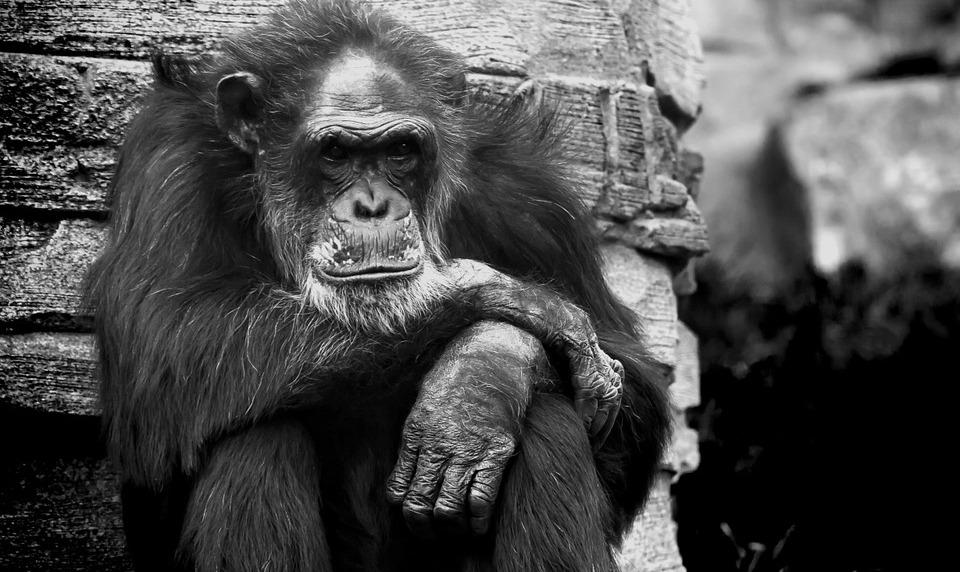 speciesism and racism