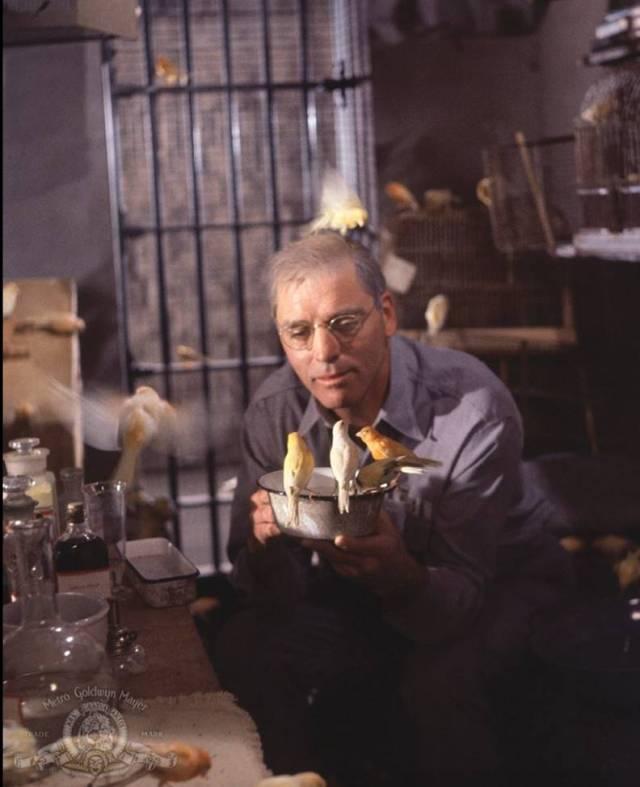 Resim 4: Alkatraz Kusçusu (1962)