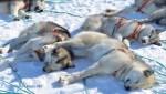 Expedícia Arctický sen - Grónsko