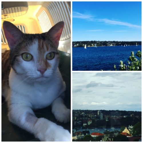 Clockwise L-R: Pebbles not happy in the car on Saturday, a walk at Cronulla, the view from my fortnightly writing job