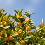 【アロマ】プチグレンの効果効能。ほんのりオレンジの香り