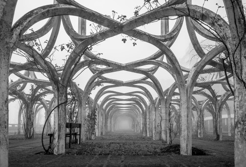Decaying rosegarden on a foggy day in autumn.