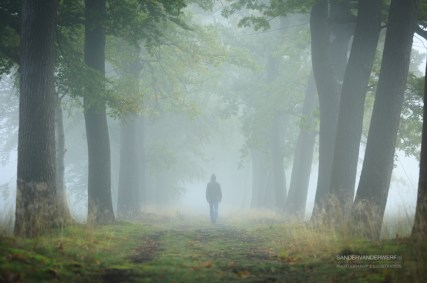 Man in hoodie walking alone in a lane on a foggy, autumn morning. Shallow D.O.F.