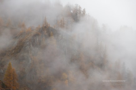 Trees of Val Grande in the fog. Italy.