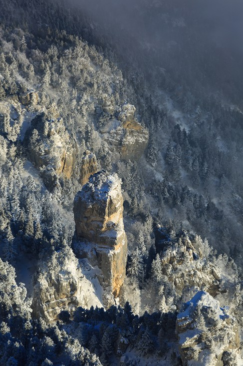 Cliffs in a snow covered forrest at a winter sunrise in the Vercors.
