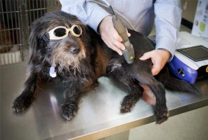 low_level_laser_therapy