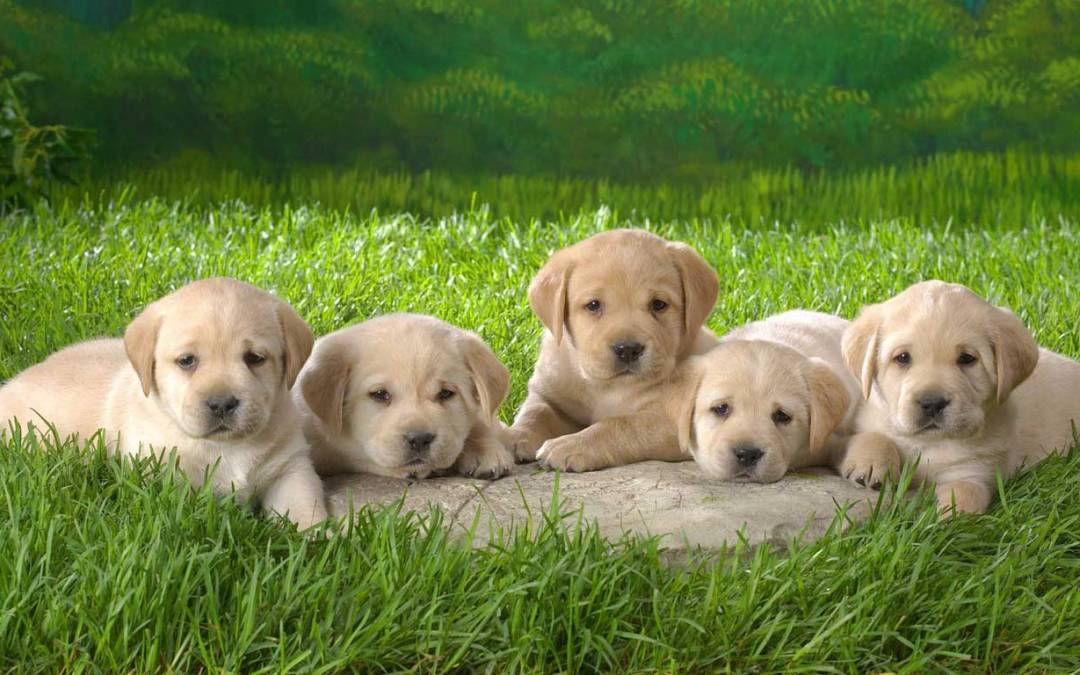 What Every Dog Owner Should Know About Parvovirus