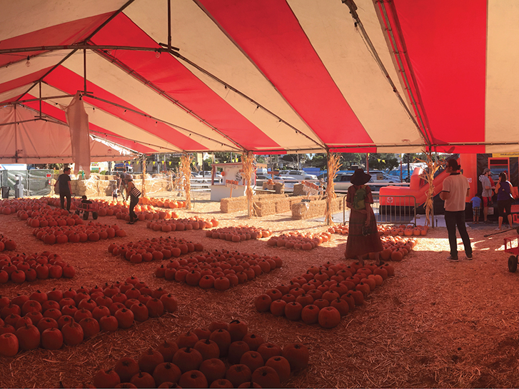 Pumpkin Patches Throughout San Diego County