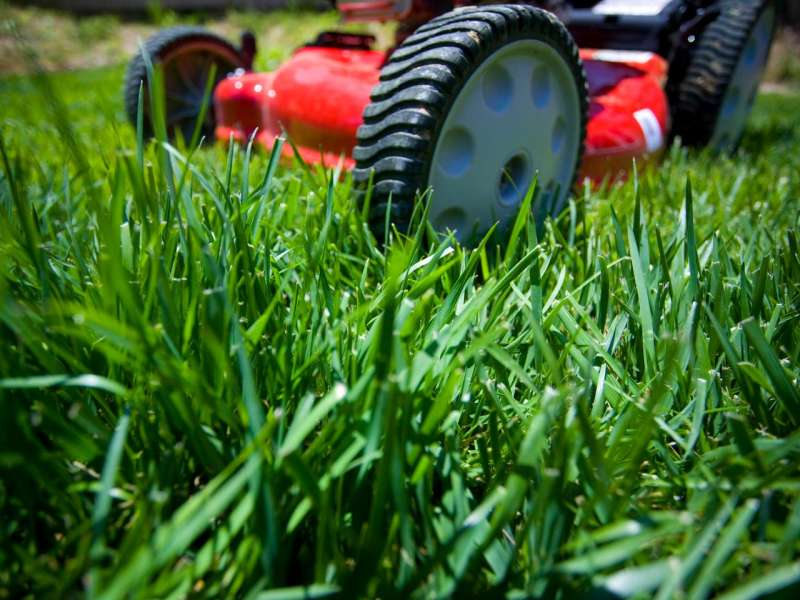 Lawn Care Services Near Me in Wooded Area