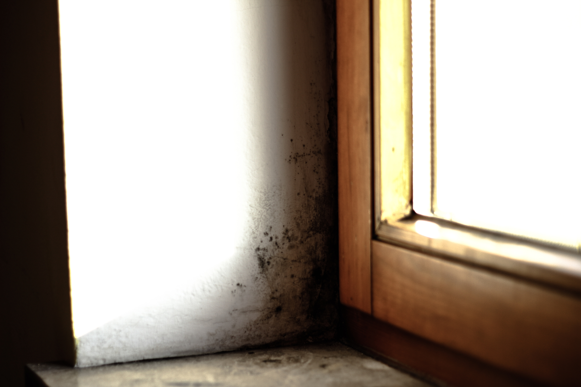 Is Black Mold Creating A Health Risk In Your Home