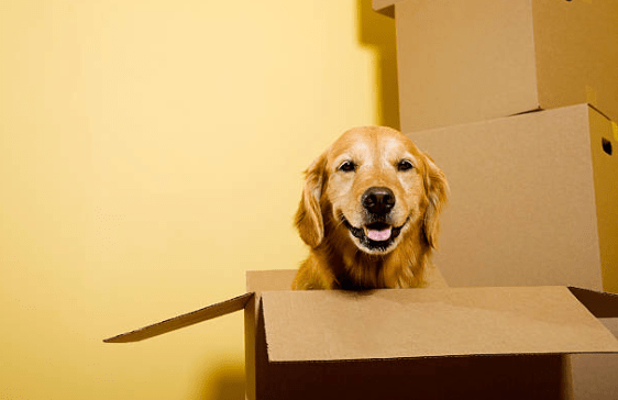 Image result for moving with pets
