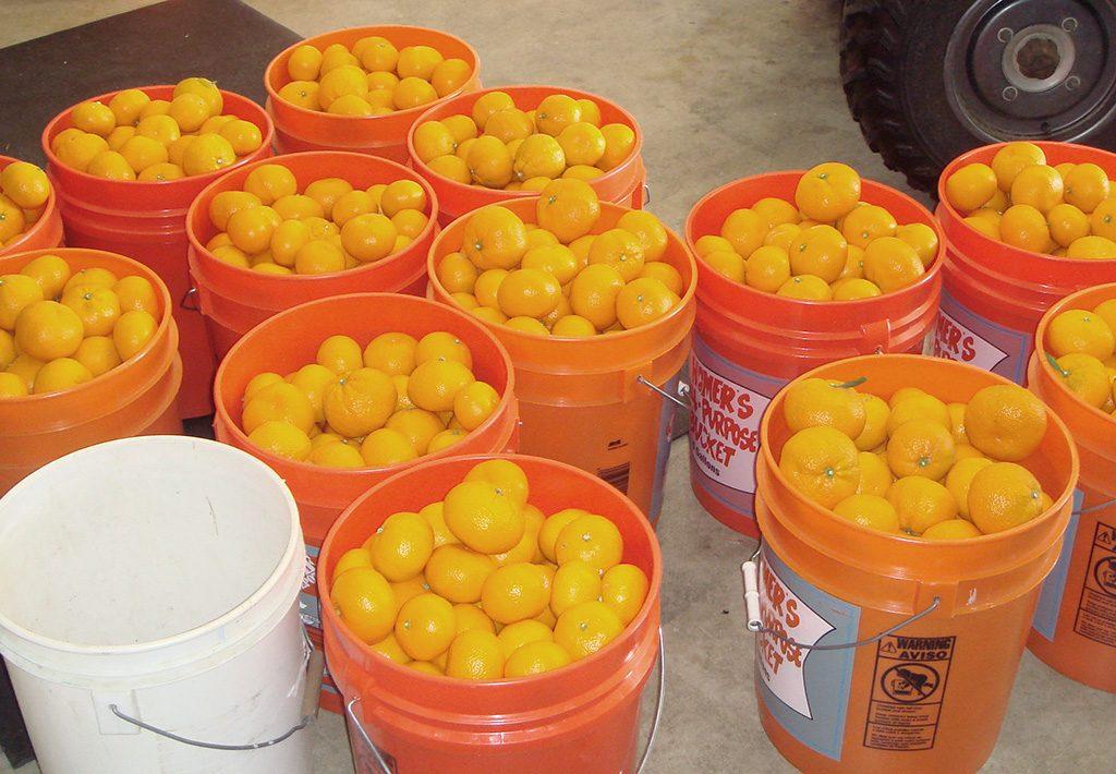 hand-picked-satsuma-mandarin-oranges-1024x710