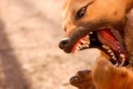 dog bite injury claim - north dakota - sand law dog bite attorneys