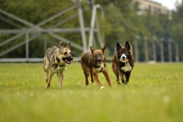 North Dakota Dog Bite Injury Attorneys - Sand Law ND