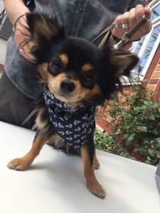 Halstuch Chihuahua maritim Anker