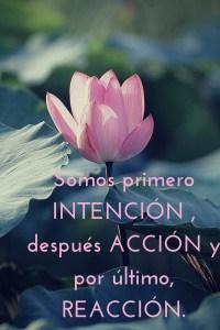 Intención, acción y reacción