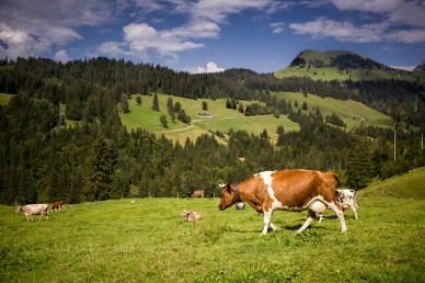 Sörenberg am Fusse des Rothorn