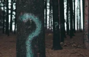 Tree with question mark