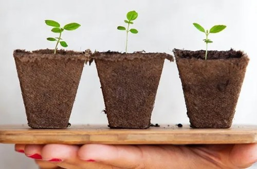 6 Things to Consider Before Growing Your Small Business