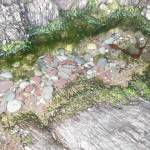 rocks tide pool