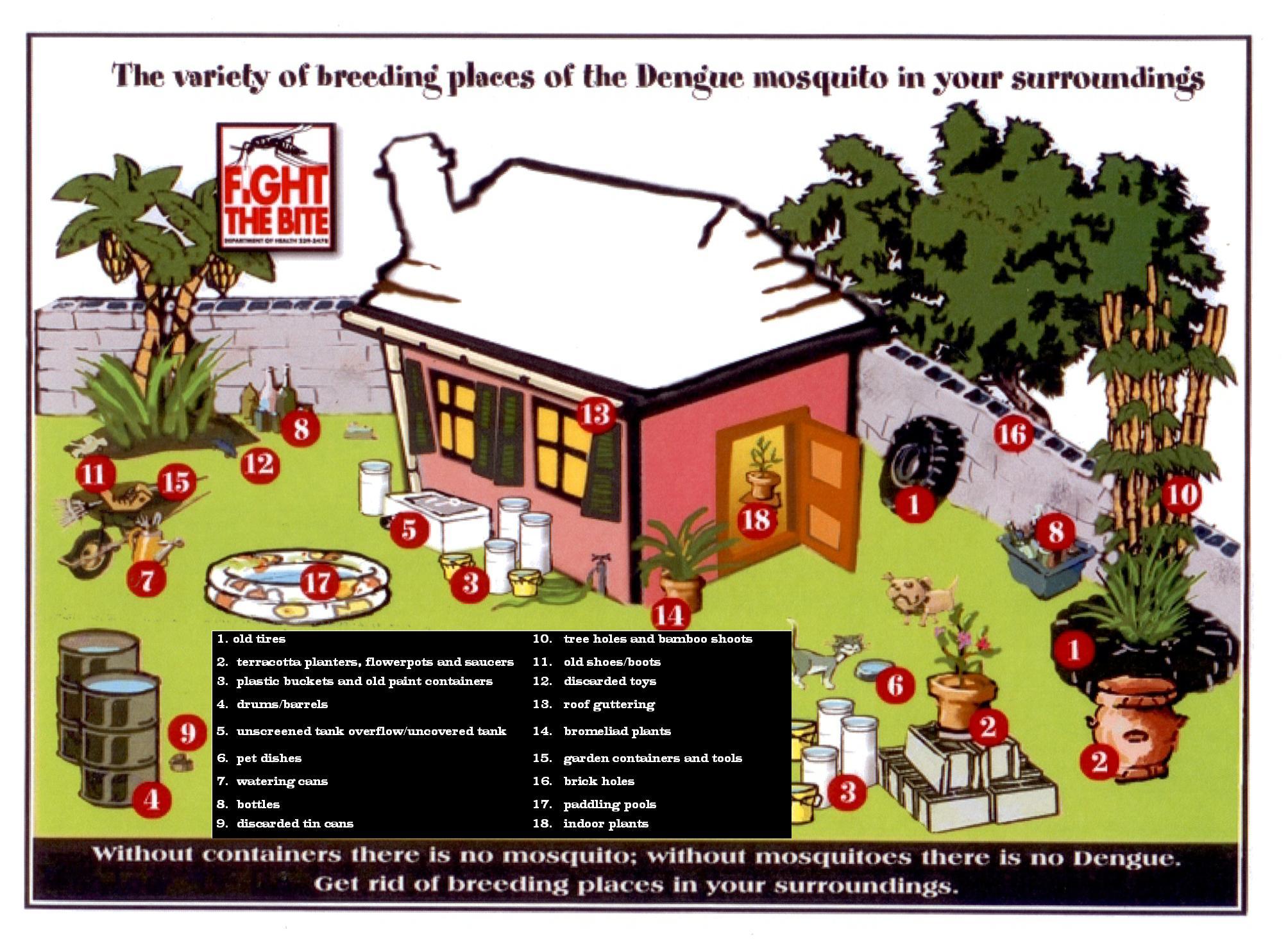 only eradicate dengue Dengue virus circulating between monkeys and mosquitoes  if we eradicate human dengue and  dengue virus circulating between monkeys and mosquitoes.