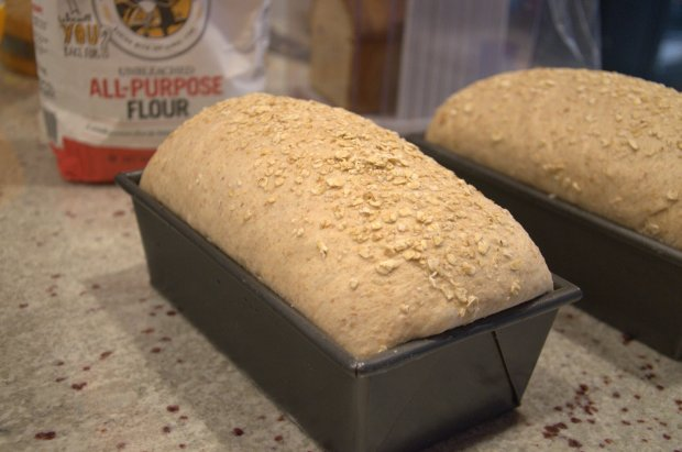 Whole Wheat Sandwich Bread with Oatmeal Topping