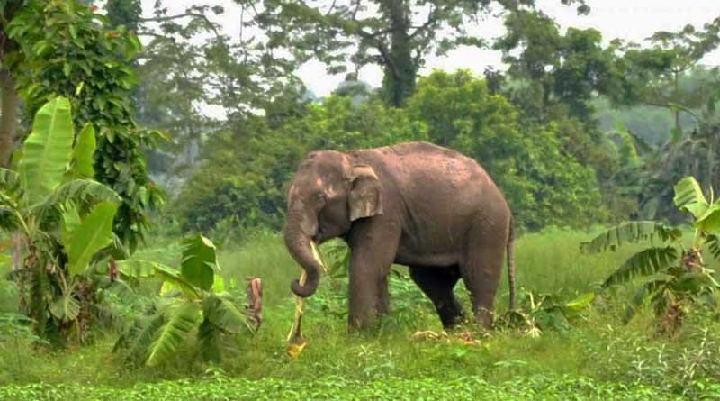 Elephant-Bangladesh