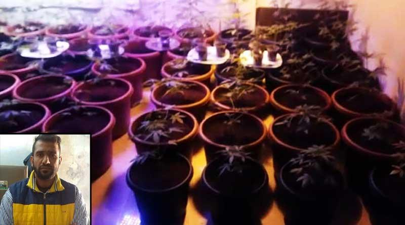 marijuana-farming