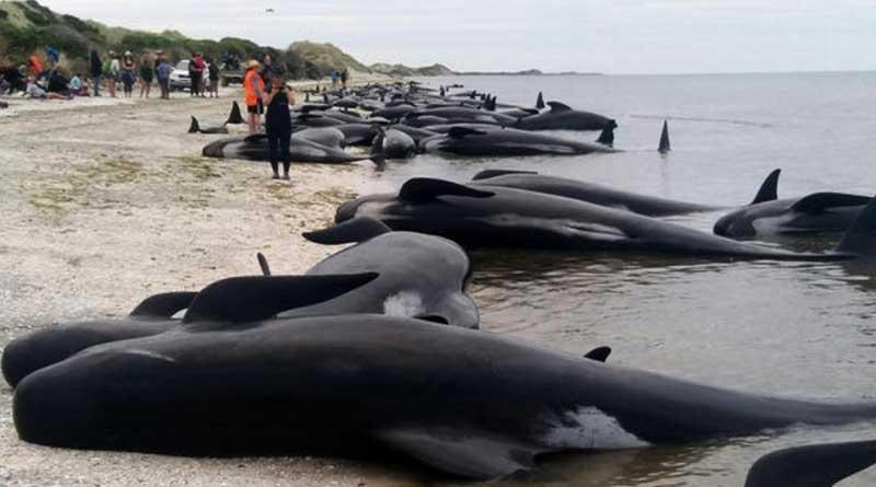 Newzealand-Whales