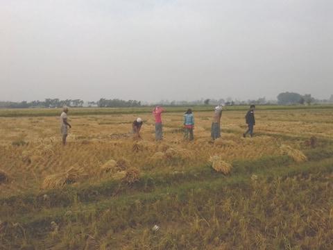 किसानहरु चैते धानबाली भित्र्याउदै,यो बालीमा लागत कम आम्दानी धेरै