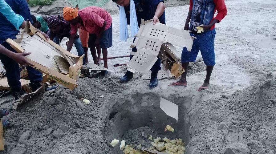 इलाका प्रहरी कार्यालयद्वारा सुराकीको आधारमा बरामद गरेको २८५० चल्ला नष्ट