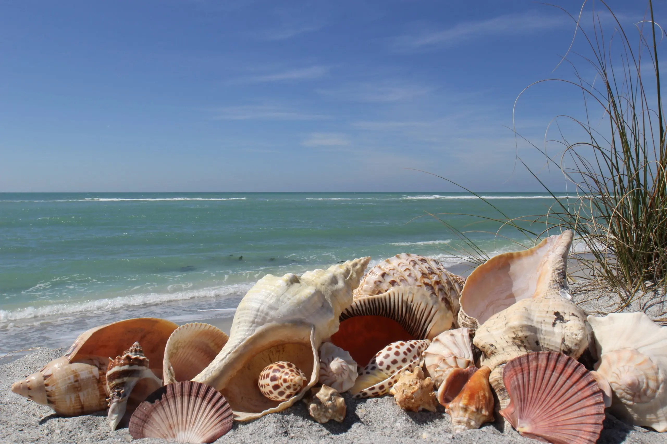 Sanibel Realtors - Shells on the beach
