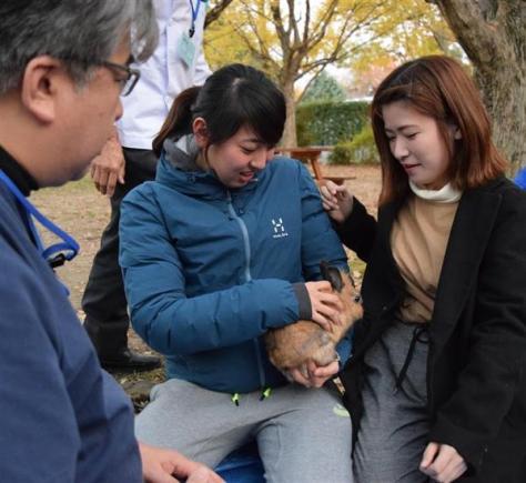 関西学院大で行われたウサギを使った飼育体験授業=平成29年11月、兵庫県西宮市
